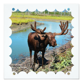 Bull Moose Invitation