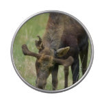Bull Moose Jelly Belly Tin