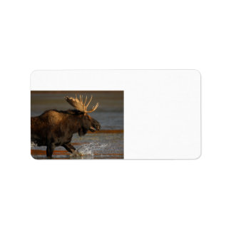 Bull Moose Personalized Address Labels