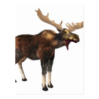 Bull Moose Looking Left Postcard