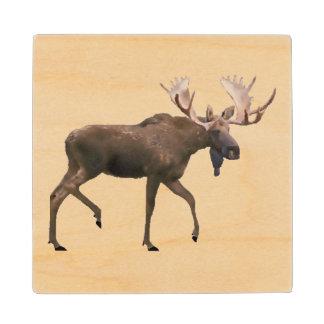 Bull Moose Maple Wood Coaster