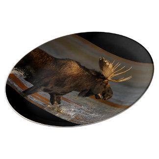 Bull Moose Porcelain Plate