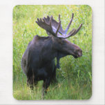 Bull Moose Mouse Pad