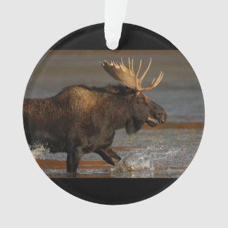 Bull Moose Ornament