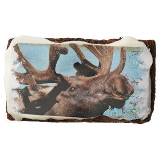 Bull Moose Rectangular Brownie