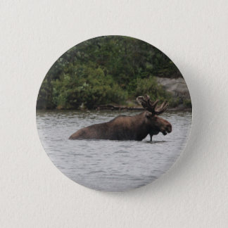 Bull Moose Pinback Button