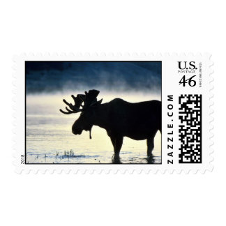 Bull moose postage stamps