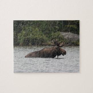 Bull Moose Puzzles
