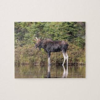Bull Moose Jigsaw Puzzle