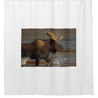 Bull Moose Splashing Shower Curtain