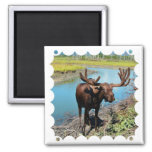 Bull Moose Square Magnet Magnets
