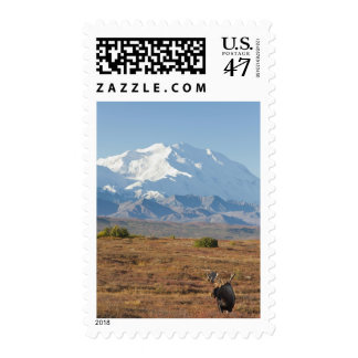 Bull moose stands on a carpet of fall foliage postage stamp