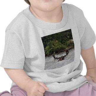Bull Moose Shirt