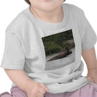 Bull Moose T-shirts
