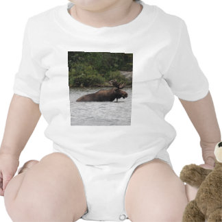 Bull Moose Baby Bodysuits