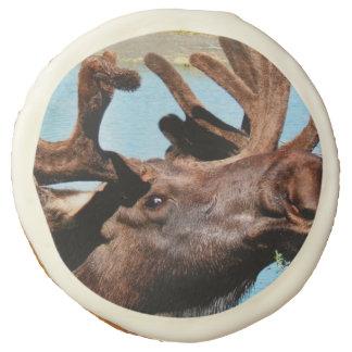 Bull Moose Sugar Cookie