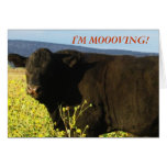 Bull negra en flores - cambio de dirección occiden felicitación