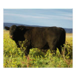 Bull negra grande en girasoles - Toro - tauro Poster