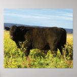 Bull negra grande en girasoles - Toro - tauro Póster