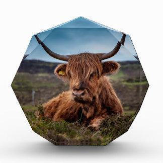 Bull on Grass Award