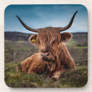 Bull on Grass Beverage Coaster