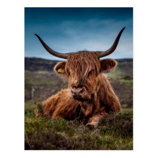 Bull on Grass Postcard
