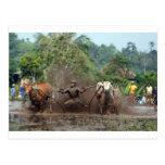 Bull que compite con en el fango postal