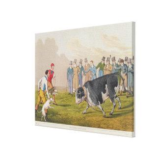 """""""Bull que hostiga"""", pub.by Thomas McLean, 1820, (i Impresión En Lona"""