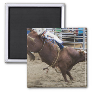 Bull rider at rodeo 2 inch square magnet
