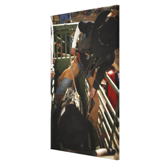 Bull rider tying rope on bull in the chute canvas prints