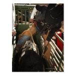 Bull rider tying rope on bull in the chute postcard