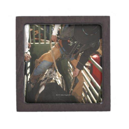 Bull rider tying rope on bull in the chute premium jewelry boxes