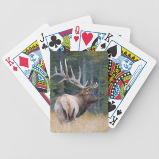 Bull Rocky Mountain Elk Bicycle Playing Cards