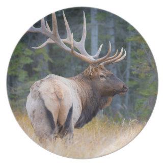 Bull Rocky Mountain Elk Plate