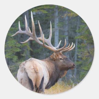 Bull Rocky Mountain Elk Round Sticker