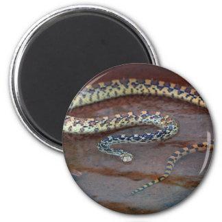 Bull Snake 2 Inch Round Magnet
