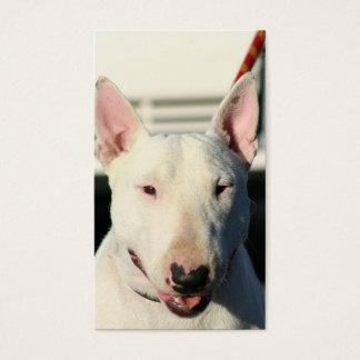 Bull Terrier Business cards