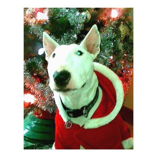 """bull terrier christmas 8.5"""" x 11"""" flyer"""