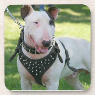 Bull Terrier dog Beverage Coaster