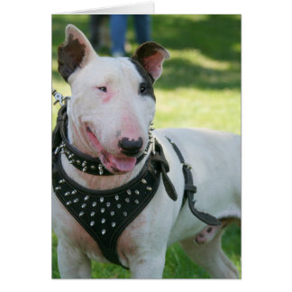 Bull Terrier dog Card