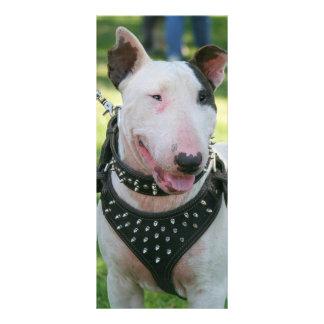Bull Terrier dog Customized Rack Card