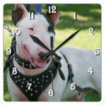 Bull Terrier dog square clock