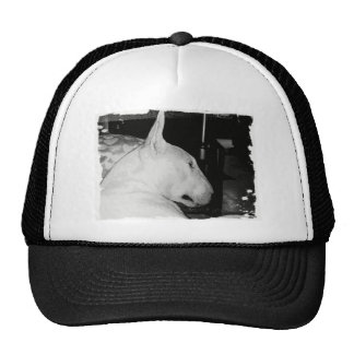 bull terrier gorros