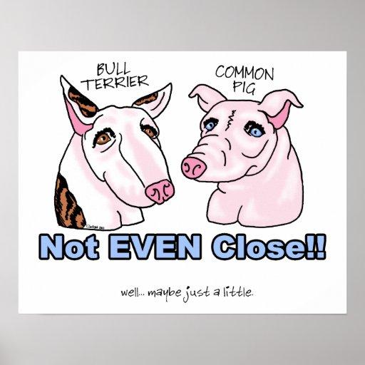 Bull terrier NO un cerdo Poster