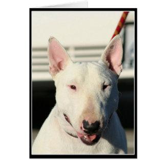 Bull terrier Notecard Felicitacion