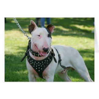 Bull terrier Notecard Tarjeton