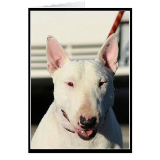 Bull terrier Notecard Tarjeta Pequeña