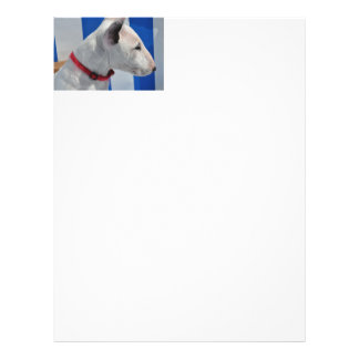 bull-terrier-.png flyer