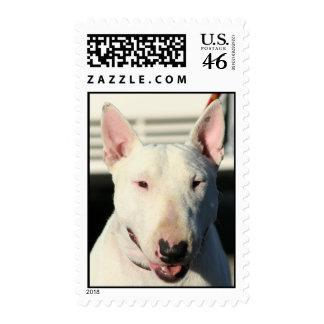 Bull Terrier postage