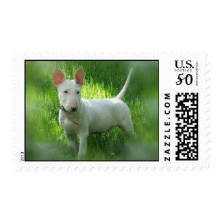 Bull Terrier Postage Stamp